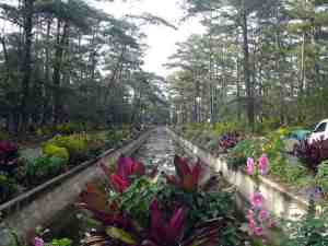 Pool_of_Pines2, Baguio City
